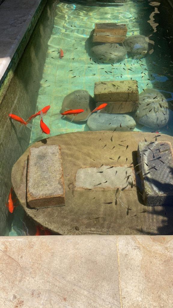 Меняем воду в аквариуме