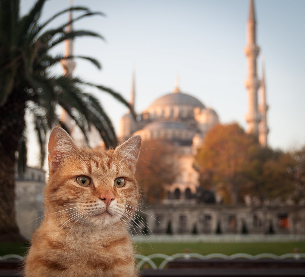 Все коты попадают в Стамбул